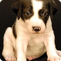 Adopt A Pet :: Grimm - Newland, NC