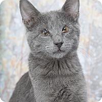 Adopt A Pet :: Dobbie - Nashville, TN