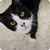 Adopt A Pet :: Linden - Pine Bush, NY