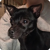 Adopt A Pet :: Prentiss - Christiana, TN