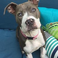 Adopt A Pet :: Eve - Dallas, GA