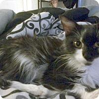 Adopt A Pet :: Domino - Oakland Park, FL