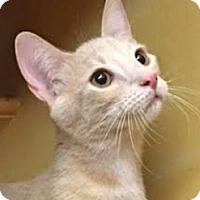 Adopt A Pet :: Cannoli - LaJolla, CA