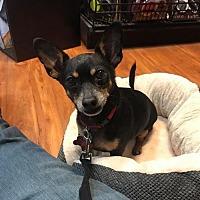 Adopt A Pet :: Chucky - Oakhurst, NJ