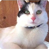 Adopt A Pet :: Penelope I - Vista, CA