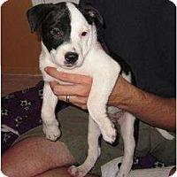 Adopt A Pet :: Fuji (adoption pending) - Phoenix, AZ