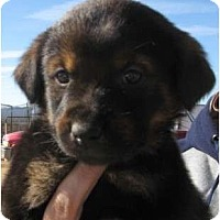 Adopt A Pet :: Emmy - Golden Valley, AZ