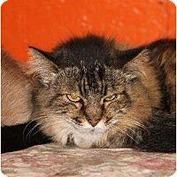 Adopt A Pet :: Darla - Metairie, LA