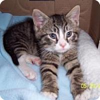 Adopt A Pet :: Bobby - Island Park, NY