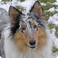 Adopt A Pet :: WINTER - Nampa, ID