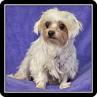 Adopt A Pet :: Mink - San Dimas, CA