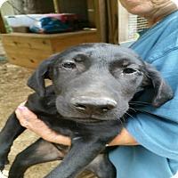 Adopt A Pet :: Magic-pending adoption - Manchester, CT