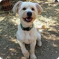 Adopt A Pet :: Carter - Las Vegas, NV