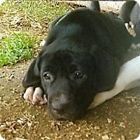 Adopt A Pet :: Ryeder - Waller, TX