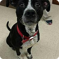 Adopt A Pet :: Jazzy - Ashtabula, OH