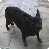 Adopt A Pet :: Khleo - Charlemont, MA