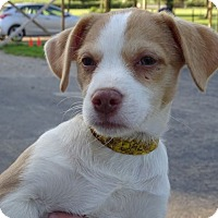 Adopt A Pet :: Dale - Delaware, OH