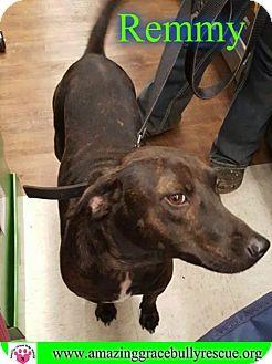Labrador Retriever Mix Dog for adoption in Pensacola, Florida - Remmy/Boo Boo