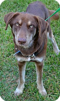 German Shepherd Dog Mix Dog for adoption in Beaumont, Texas - Zorro