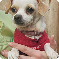 Adopt A Pet :: Penelope - Menomonie, WI