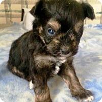 Adopt A Pet :: I'M ADOPTED BbyNwYr Resolution - Oswego, IL
