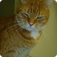 Adopt A Pet :: Butternut - Hamburg, NY