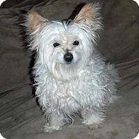 Adopt A Pet :: **CHLOE - Peralta, NM