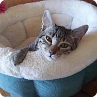 Adopt A Pet :: Ruffian - Littleton, CO