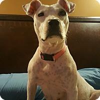 Adopt A Pet :: Italia - Staunton, VA