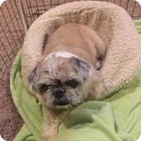 Adopt A Pet :: Tootsie Rose in RI - Providence, RI