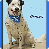 Adopt A Pet :: Benson - Hillsboro, TX
