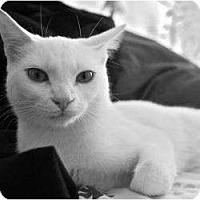 Adopt A Pet :: Farrah - Radford, VA