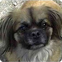 Adopt A Pet :: Mikey-PA - Mays Landing, NJ