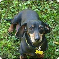 Adopt A Pet :: Eleanor - San Jose, CA