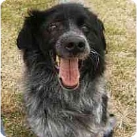 Adopt A Pet :: Pepper  - In Maine! - kennebunkport, ME