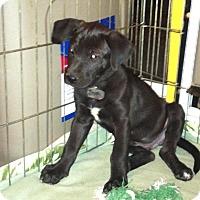 Adopt A Pet :: Irvin - Phoenix, AZ