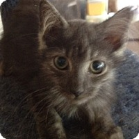 Adopt A Pet :: Wolfie - Ft. Lauderdale, FL