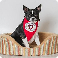 Adopt A Pet :: *SIR WALLACE - Sacramento, CA