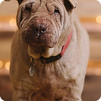 Adopt A Pet :: Dolly - Portland, OR
