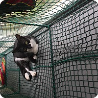 Adopt A Pet :: Dustin - Boca Raton, FL