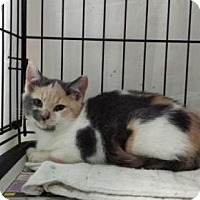 Adopt A Pet :: ID 5705 - Williamsburg, VA