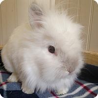 Adopt A Pet :: Dexter - Watauga, TX