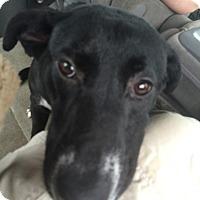 Adopt A Pet :: Buttercup - Huntsville, AL