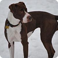 Adopt A Pet :: Hazel Grace - Salt Lake City, UT