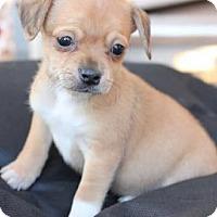 Adopt A Pet :: Foxtrout - Christiana, TN