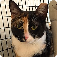 Adopt A Pet :: Moxy Meepy - Chicago, IL