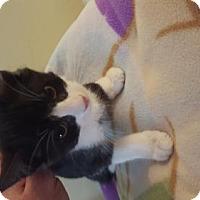 Adopt A Pet :: Baymax - Oakhurst, NJ