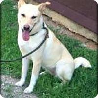 Adopt A Pet :: Calla - Rexford, NY