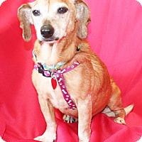 Adopt A Pet :: Fritzi - Umatilla, FL