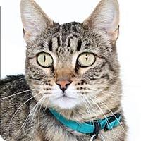 Adopt A Pet :: McGonagall - San Luis Obispo, CA